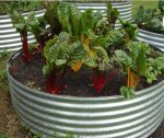 growing vegetables in earth rings by Yummy Gardens Melbourne