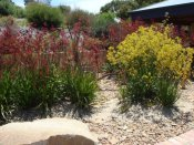 drought tolerant garden designed & built by Yummy Gardens Melbourne