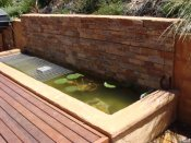fish pond designed & built by Yummy Gardens Melbourne