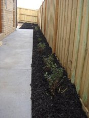 newly planted and mulched sideway by Yummy Gardens Melbourne