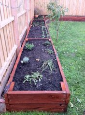 stained L shaped veggie beds by Yummy Gardens Melbourne
