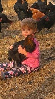 Cuddling an Australorp cross New Hampshire Chicken at Yummy Gardens Melbourne