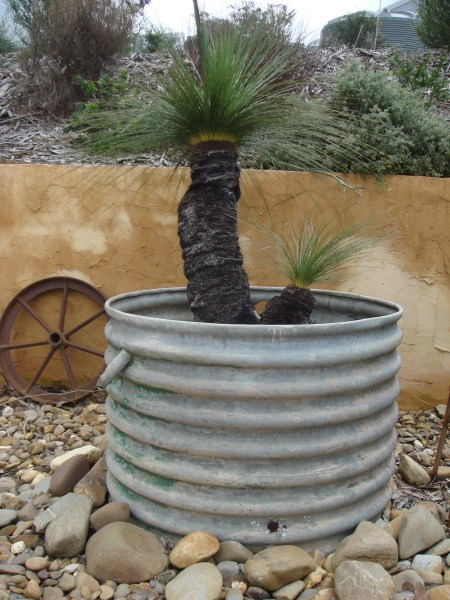 grass tree grown in earth ring by Yummy Gardens Melbourne