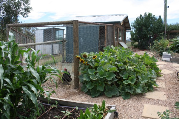 chook house and vege garden
