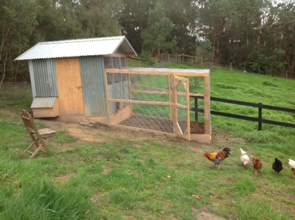 Chook house with side access, nesting box and enclosed run designed & built by Yummy Gardens Melbourne