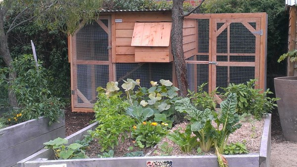 Community Garden chook house designed and built by Yummy Gardens Melbourne
