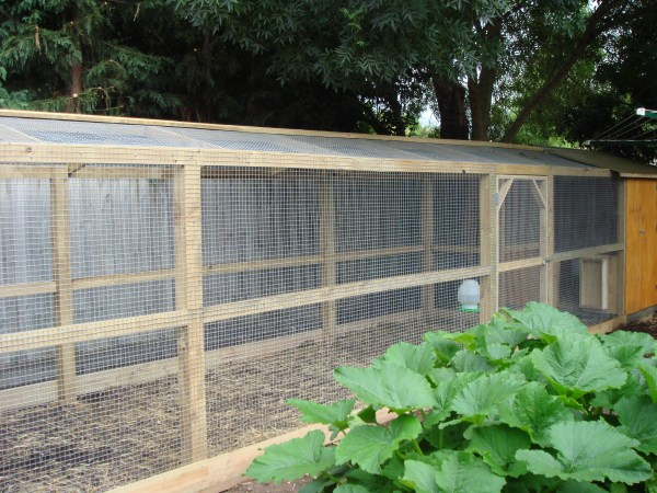 custom built chook run by Yummy Gardens