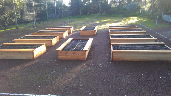 cypress vegetable beds on an old tennis court by Yummy Gardens Melbourne