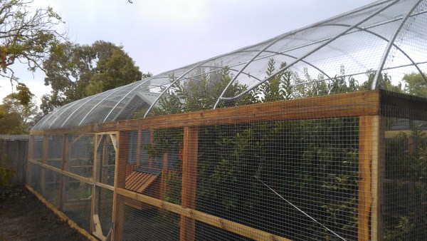 chookhouse and fruit trees by Yummy Gardens Melbourne