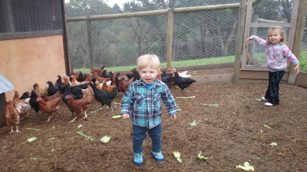 Kids and chickens at Yummy Gardens Melbourne