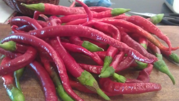 Loads of chillis grown at Yummy Gardens Melbourne