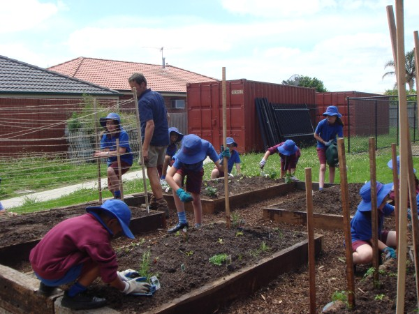 planting out school veggie patch by Yummy Gardens Melbourne
