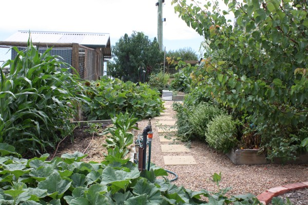 raised vegetable beds by Yummy Gardens Melbourne