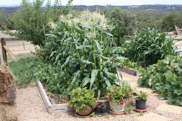 summer veggies by Yummy Gardens Melbourne
