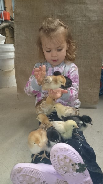 Trinity with baby chickens at Yummy Gardens Melbourne