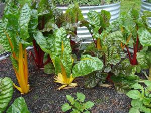 Organic Gardening Blog
