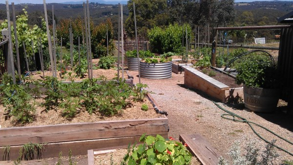 our vegetable garden at Yummy Gardens Melbourne