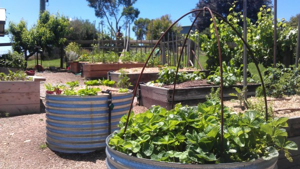 raised bed veggie garden at Yummy Gardens Melbourne