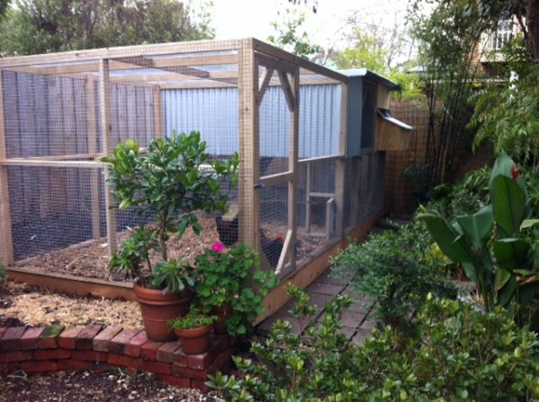 backyard chook house with secure run by yummy gardens melbourne