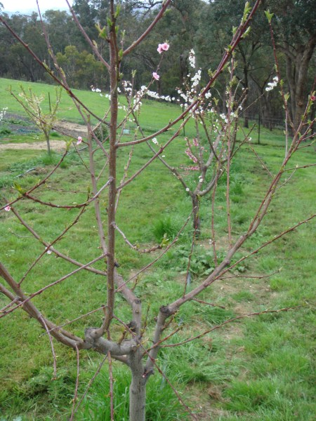 home orchard by Yummy Gardens Melbourne