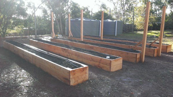 Raised beds designed for growing berries by Yummy Gardens Melbourne